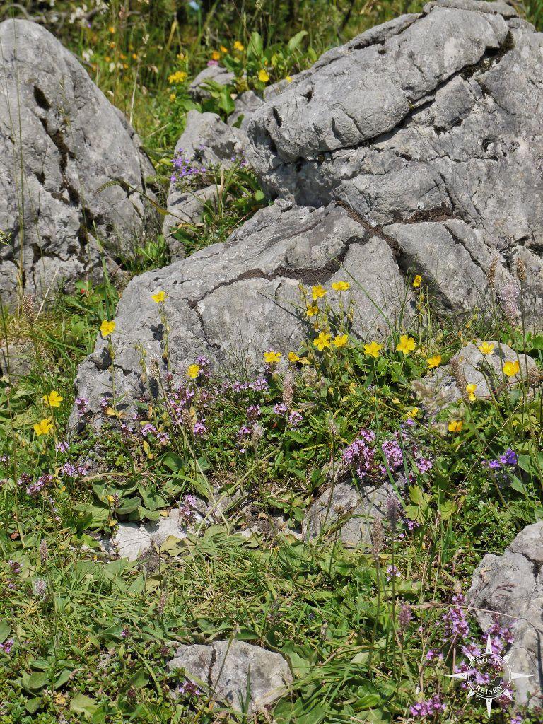 Blumenpracht Bayern