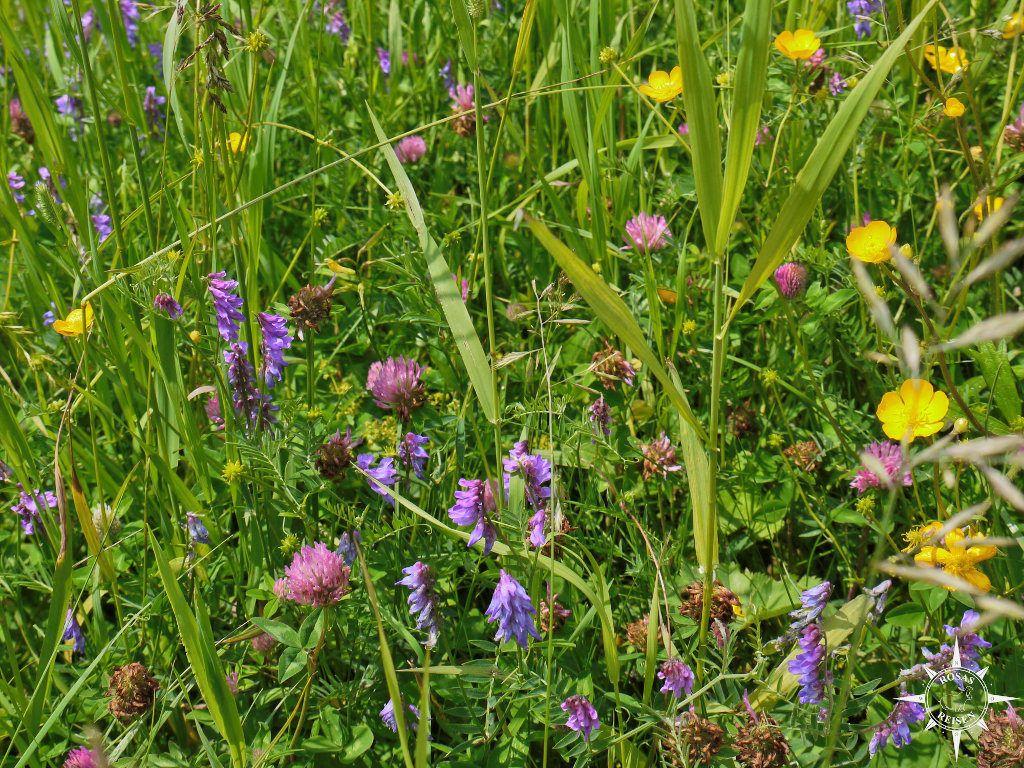Bayerns Blumen