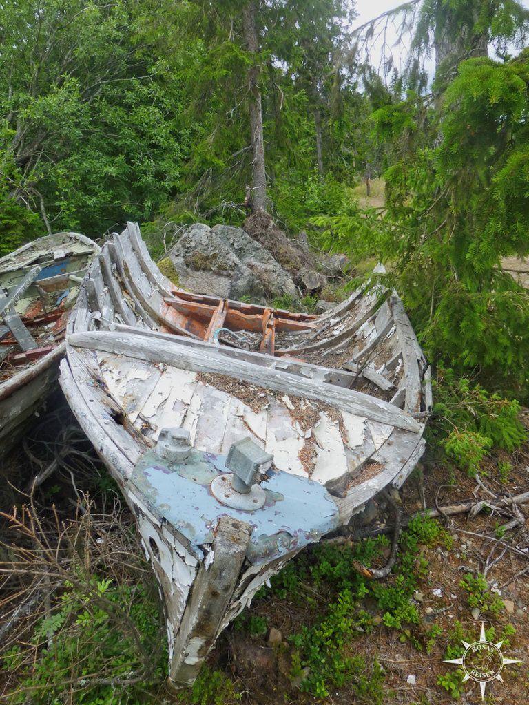 Boot im Wald