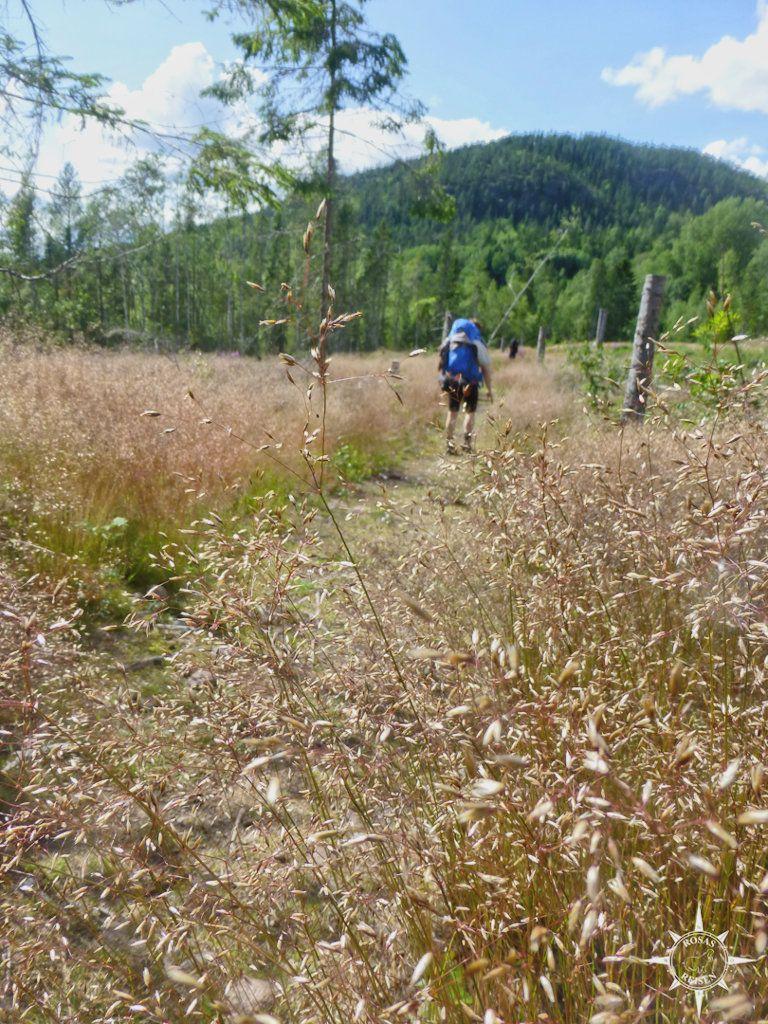 Wandern im Skuleskogen National Park