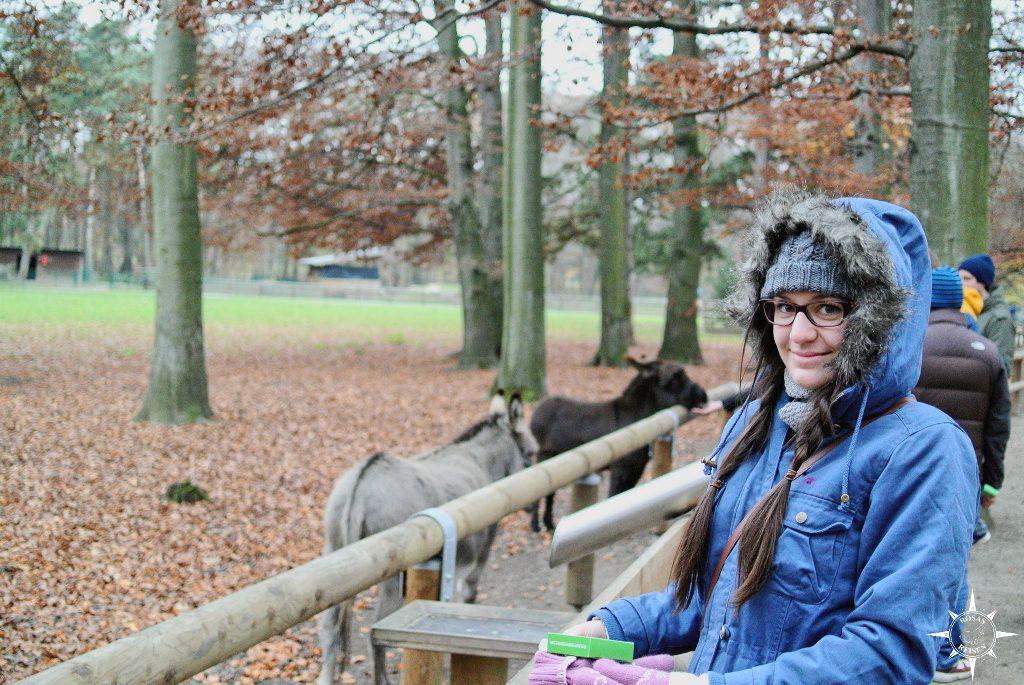 Im Stadtwald (9)