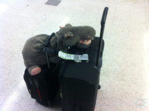 tipps-kofferpacken