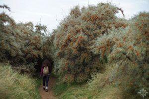 east-lothian-coast-walk-4