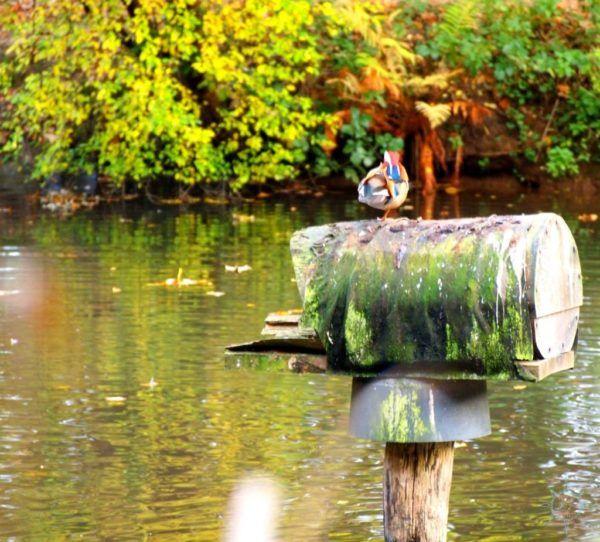 Herbstspaziergang Köln-Brück